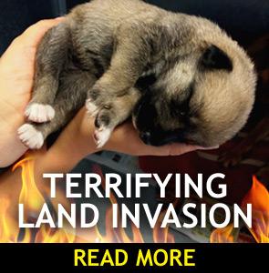 Land Invasion